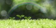 Drie groeiende plantjes op een groen gras met een regenboog